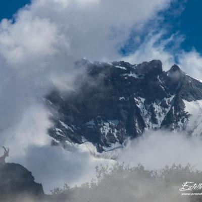 Bouquetin des Alpes_exposition multiple