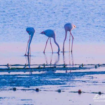 Camargue : l'étang des Impériaux