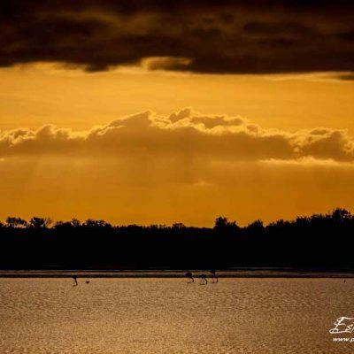 Lever de soleil sur l'étang des Impériaux