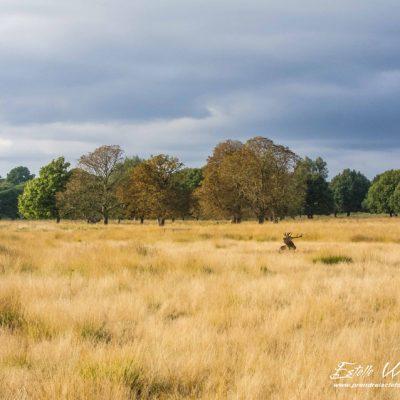 Paysage de Richmond Park